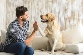 Mascotas en el hogar lo que debes saber